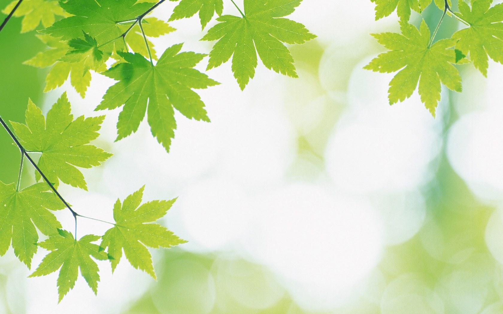 หัวน้ำหอม herbal green : 000868